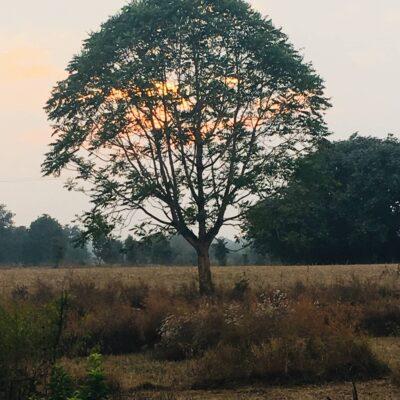 Ways to traverse a tree